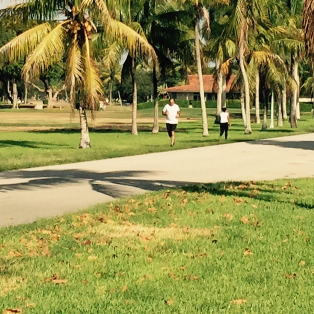 runners on a bright sunny day in Coral Gables