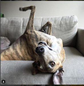 greyhound3