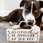 """Lucy, a black dog with parts of her face in white, laying down with her paws on top of a white sign that reads """"All guests must be approved by the dog."""""""